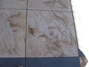 Pavers with leaf and bark stains